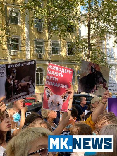 В Николаеве зоозащитники пикетируют полицию