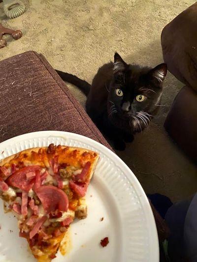 Домашние животные с голодным взглядом не дают нормально поесть.