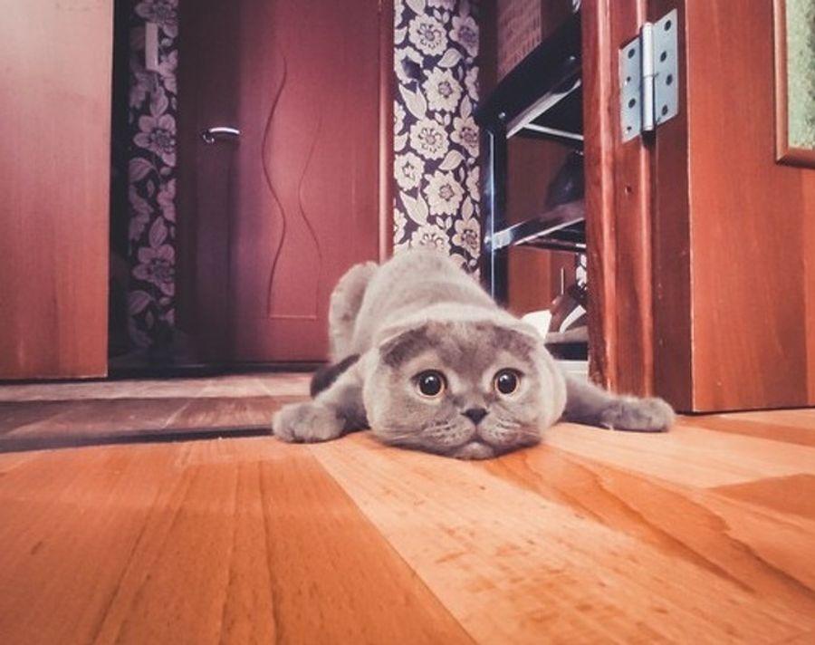 19 ситуаций, которые могли произойти только с владельцами котов