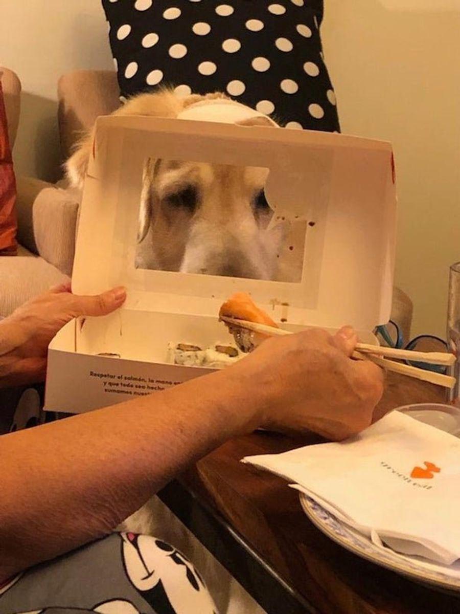 Домашние животные с голодным взглядом не дают нормально поесть