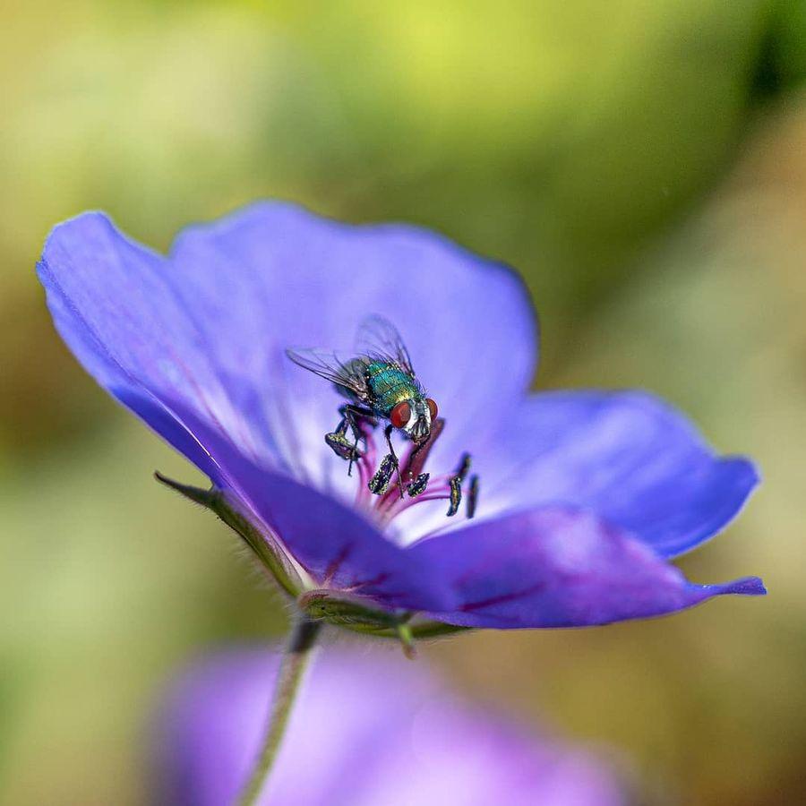 Красивые снимки цветов и насекомых от Кайла ван Бавела