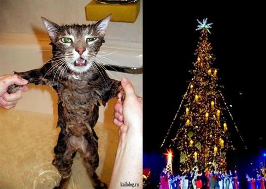 В Тбилиси установили «лысую» новогоднюю елку: соцсети смеются