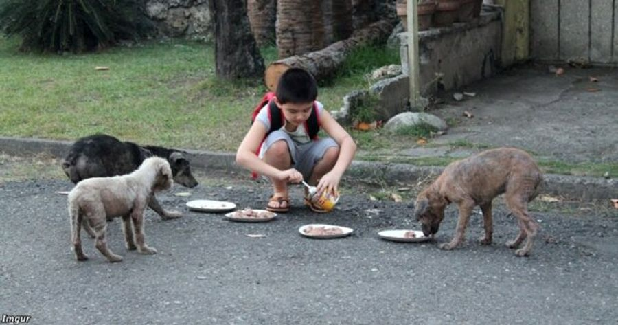 На Филиппинах 9 летний мальчик открыл приют для собак, потратив все карманные сбережения