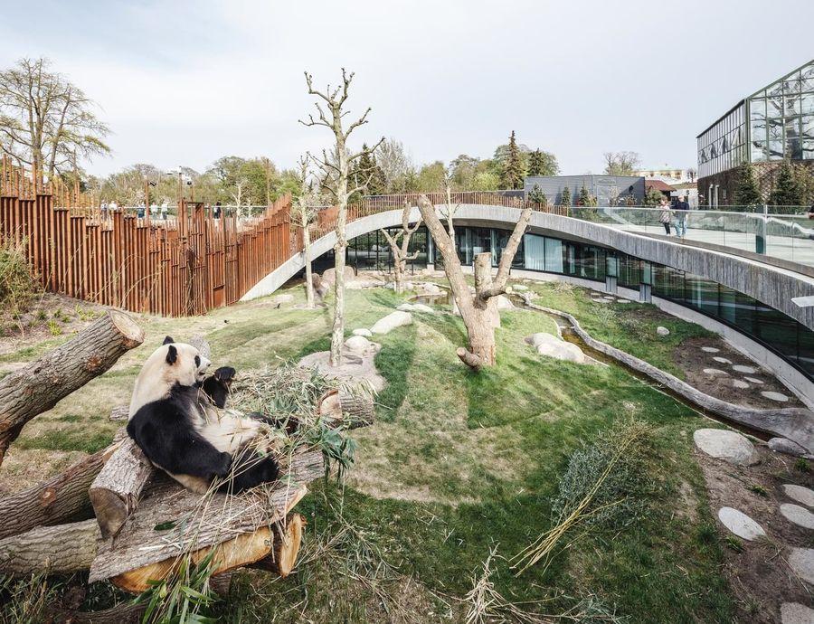Дом-вольер для панд в Копенгагенском зоопарке